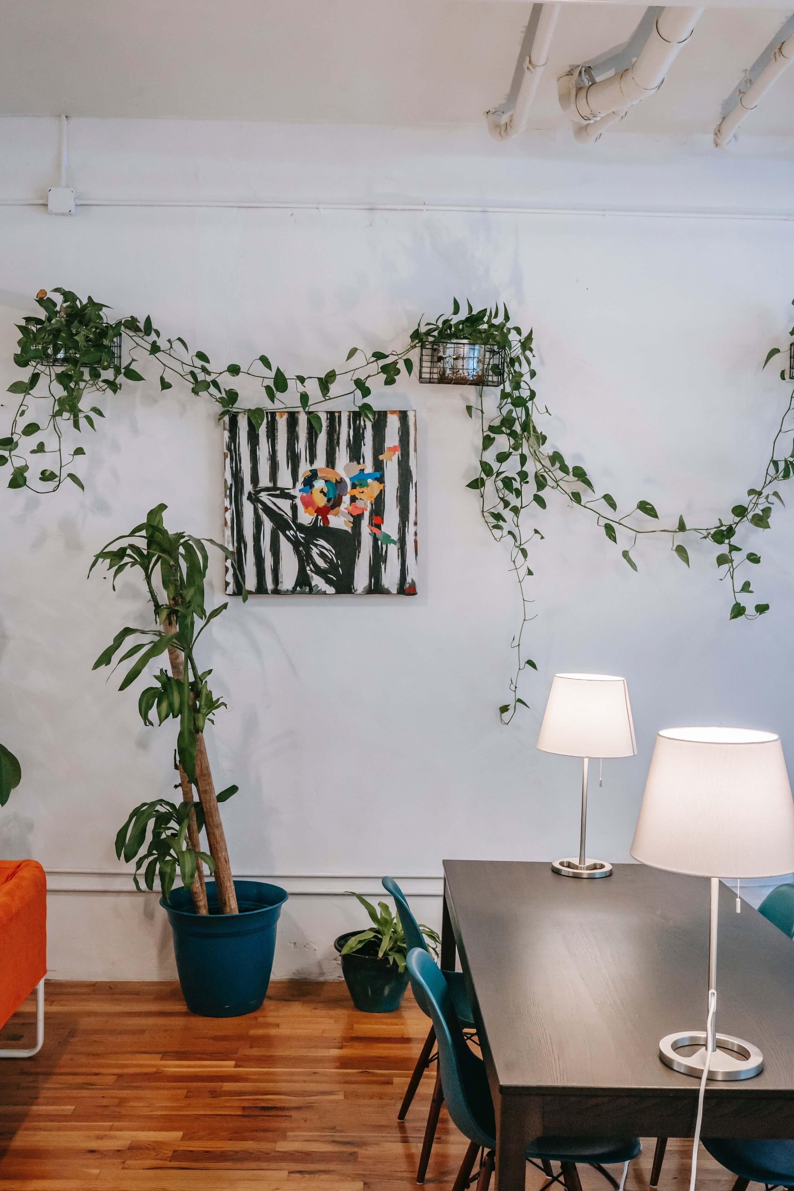 logement coloré avec plantes
