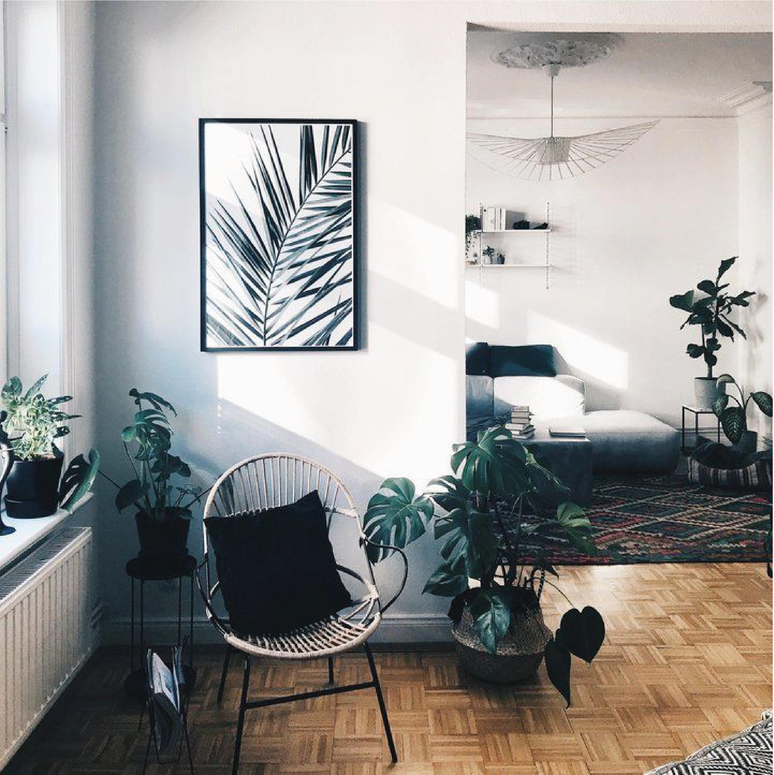 Intérieur avec plantes et parquet pose mosaïque